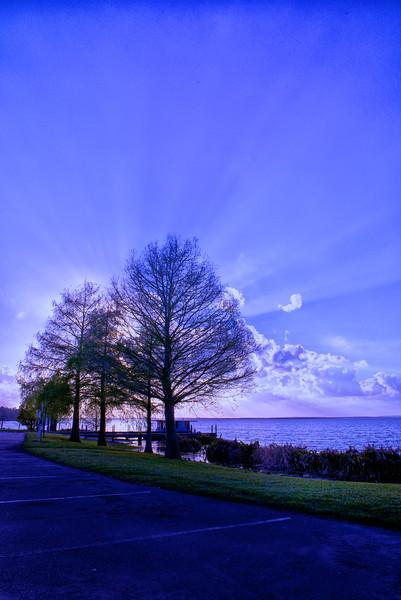 """ETC-3055  """"Blue Sunburst Through Trees"""""""