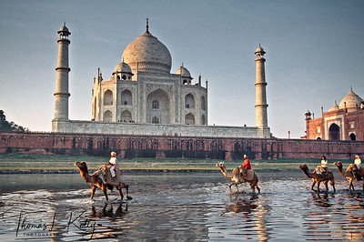 Camel crossing river Jamuna with Taj Mahal in the background. Agra, India.