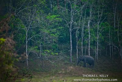 Periyar National Park. Kerala, South India.