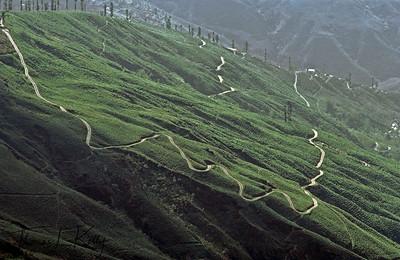 Tea state in Darjeeling, India.