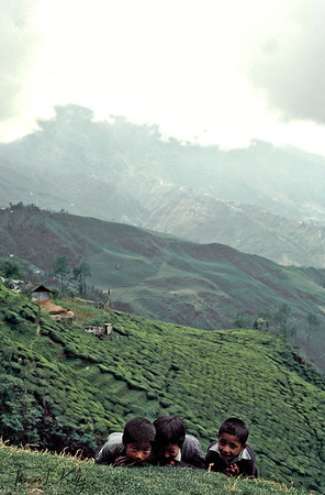 School kids playing around tea state.  Darjeeling, India.