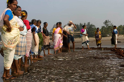Fisher-women at work. Baga beach.
