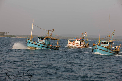 Goan Fishermen at Arabian sea. Seen on the background is Morjim beach  which is situated near the mouth of Zuari River  that joins Arabian Sea. Morjim Beach is known for its natural beauty. Goa, India.