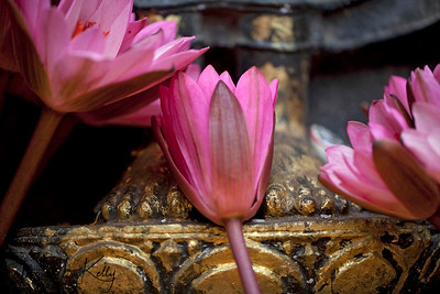 Flower offering at Buddha's feet. Mahabodhi templ. Bodhgaya, Bihar, India. (Jan-2012)