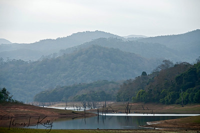 Periyar National Park.  Kerala, South India.
