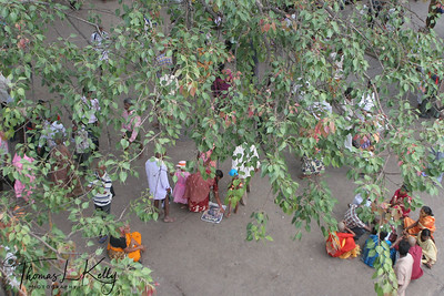Peepal tree, on the way to Srivari Padalu. Pilgrims make offering (tie sacred thread around the tree or on branches) in the hopes of gaining fertility.