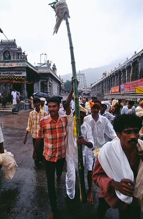 Devotees walking towards to the Mt. Arunachala.