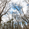 Forest Resource Center Trail
