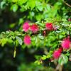Waimea Valley Flora