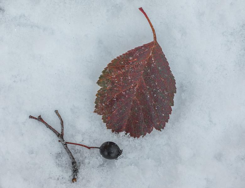 Autumn Caught Unawares