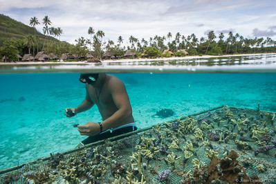 Coral Gardeners - Save the reefs now !