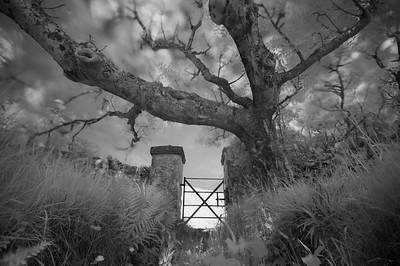 Gate and Tree, McArthur's Head , Isle of Islay, Scotland. 2014