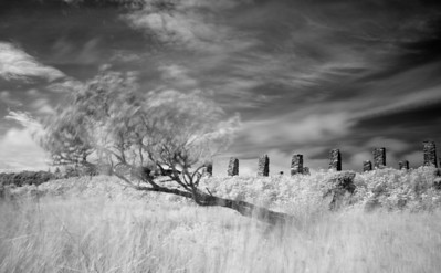 Ruins of Tileworks and Tree, Foreland, Isle of Islay, Scotland. 2012