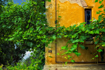Facade 31 | Fine Art Street Photography Villa Bucharest Romania Window to the World Green Vegetation Ivy Hedera Klimop Creeping Plant Climbing Against the Wall House Number 31 Live Living Street Art