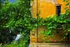 Facade 31 | Fine Art Street Photography Villa Bucharest Romania Window to the World Green Vegetation Ivy Hedera Klimop Creeping Plant Climbing Against the Wall House Number 31 Live Living Street Art