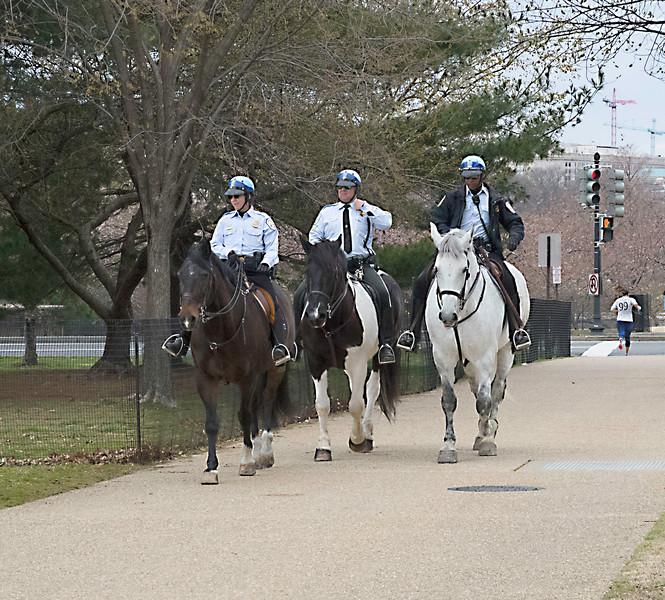 Washington, DC Horses