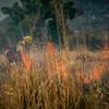 Arivaca Fire Prescribed Burn-1547
