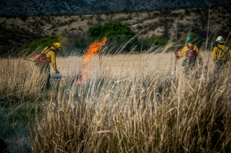 Arivaca Fire Prescribed Burn-1365