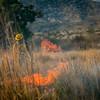 Arivaca Fire Prescribed Burn-1544