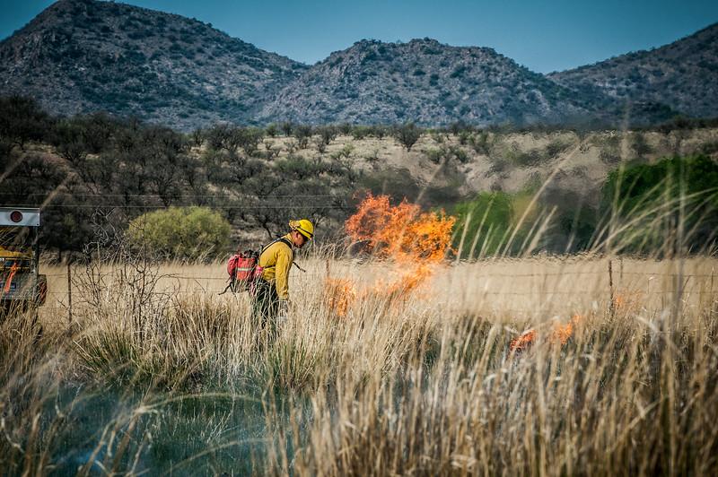 Arivaca Fire Prescribed Burn-1385