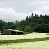 White Clover Fields