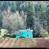 Blueberry Farm