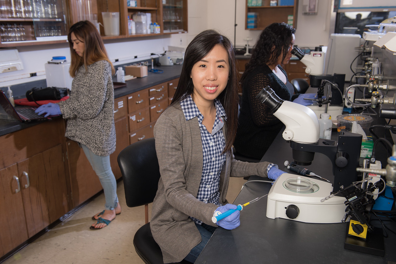 Students of Dr. Fang Wang are studying the Zebrafish Zebra Fish for its medicinal purposes.