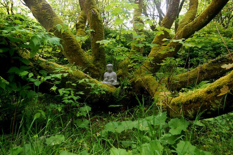 Buddha in a Garden