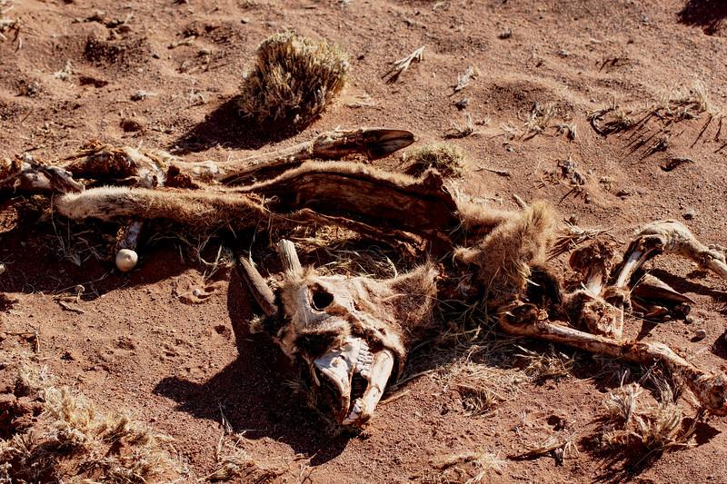Bones of Prey