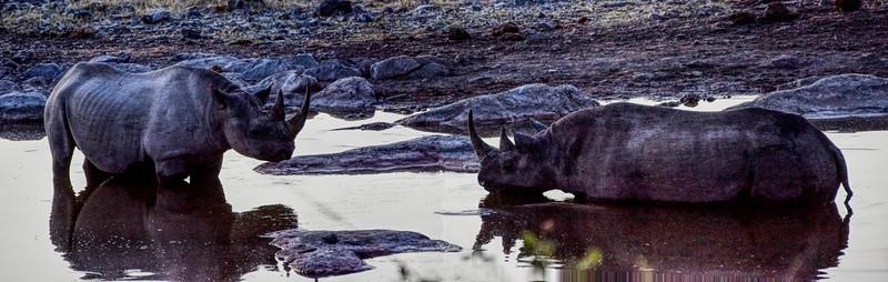 Black Rhinoceros at a Waterhole at night