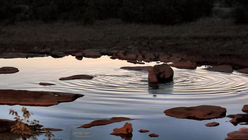 Video - Black Rhinoceros in Etosha National Park - Namibia