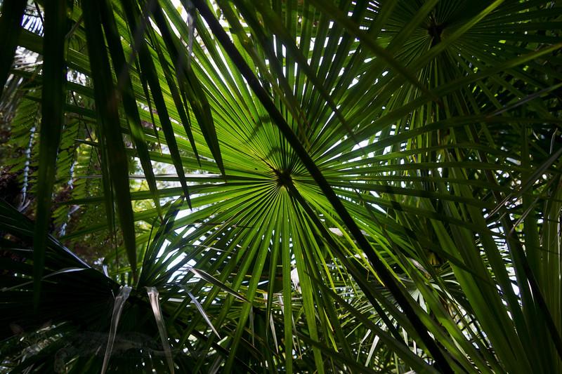 Looking up in Wendy's Secret Garden