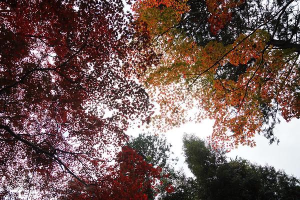 Autumn Foliage near Takiguchi-dera Temple