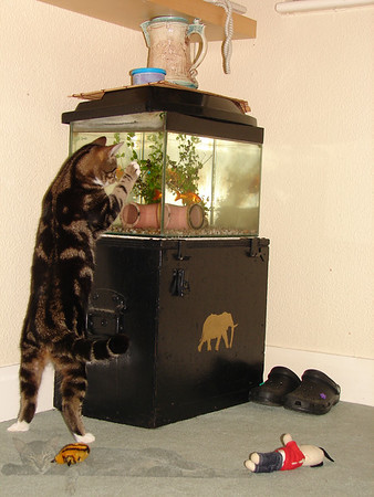 Cats Like Fishing