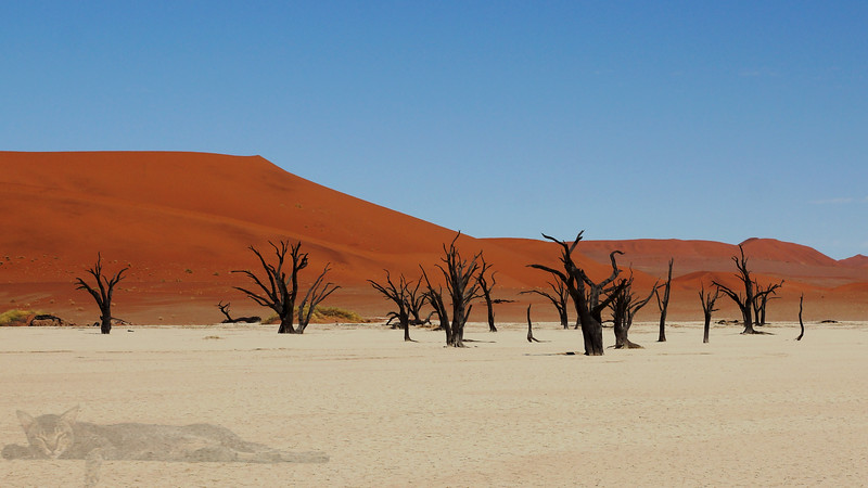 Dead Tree Forest (Deadvlei) - Namibia
