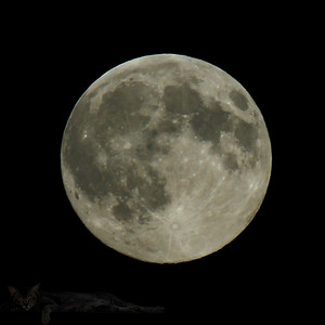 The Moon - Beware