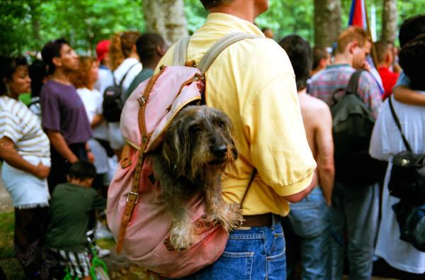 New York - Dog in A Rucksack - Central Park