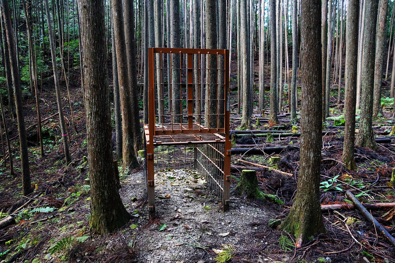 Bear Trap on the Kumano Kodo Trail