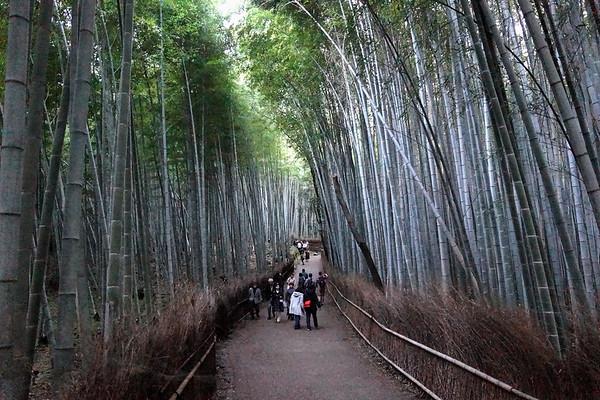 Kyoto - Arashiyama Bamboo Forest