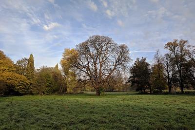 Morden Hall Park - National Trust
