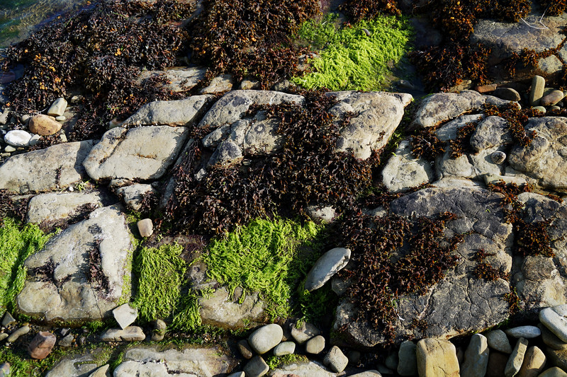 Seaweed and Rock - Rousay