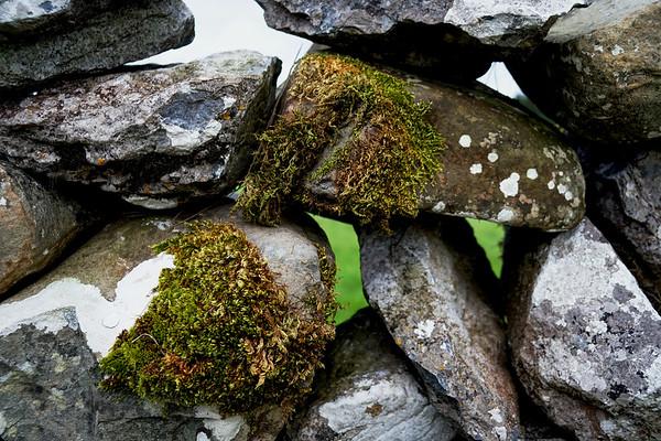 Moss on a Dry Stone Wall - Ireland