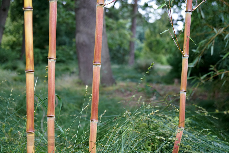 Binary Bamboo
