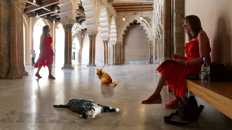Ladies with Cats - Palacio de la Aljaferia