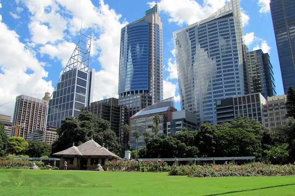 Sydney Botanical Gardens - Rose Garden