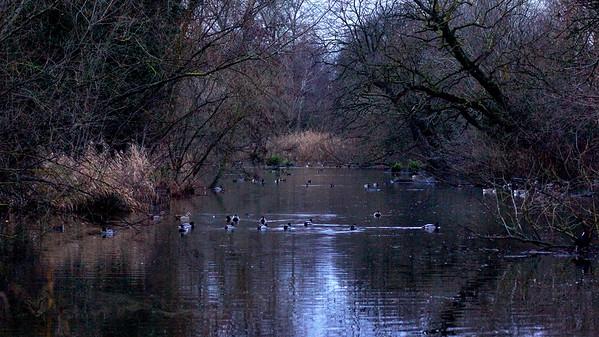 Cannon Hill Common Lake