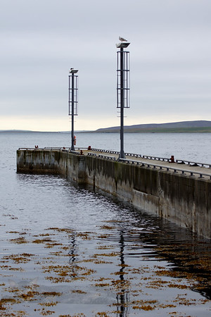 Egilsay Pier - Gulls on Posts