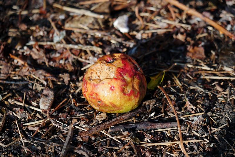 Apple Entropy