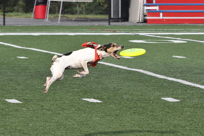 09/11/2011 - Frisbee Dogs