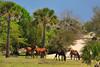 GA SAINT MARYS CUMBERLAND ISLAND NATIONAL SEASHORE DUNGENESS TRAIL IN DUNES WILD HORSES MARAB_MG_2578MM